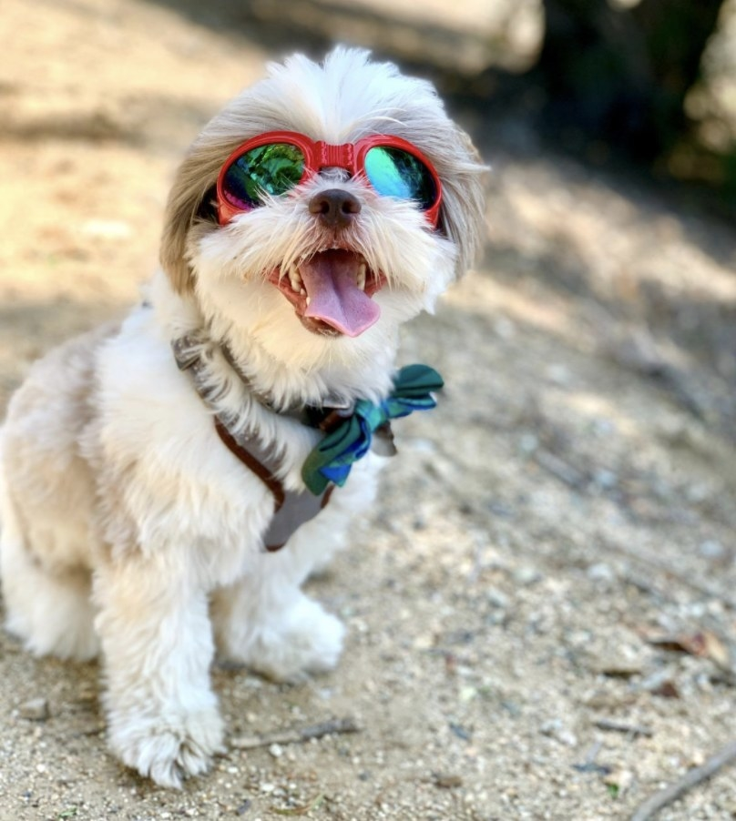 A dog wearing red goggles