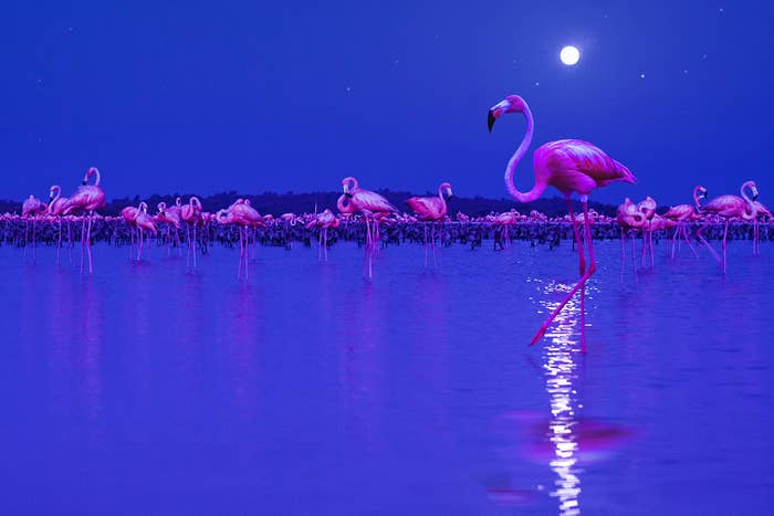 flamingos in the night