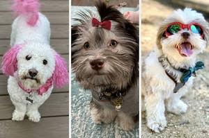 A split thumbnail of three dogs