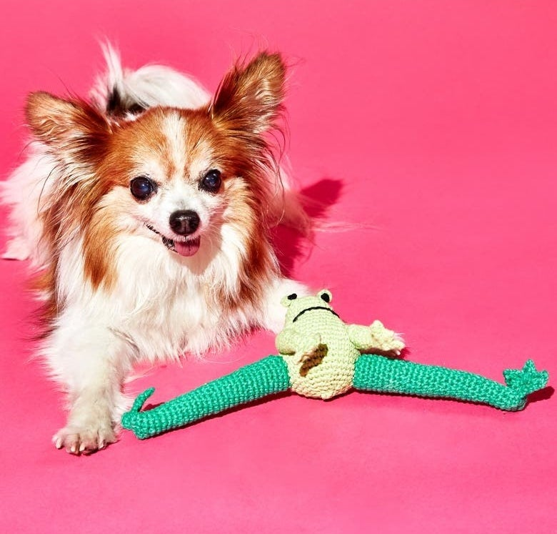 A frog toy next to a small dog