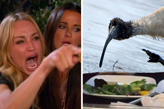 Its Time We Talk About Why The Ibis Is Actually Iconic