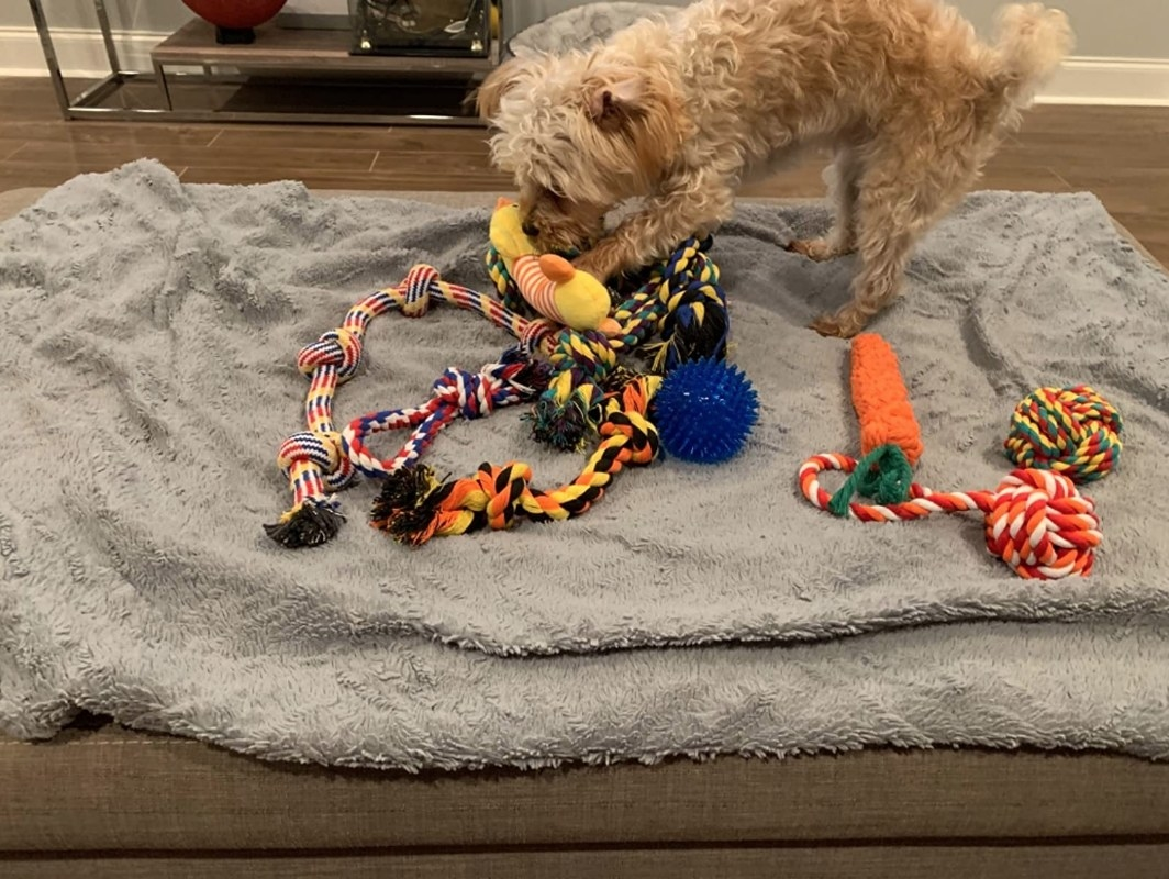 Dog playing with chew toys
