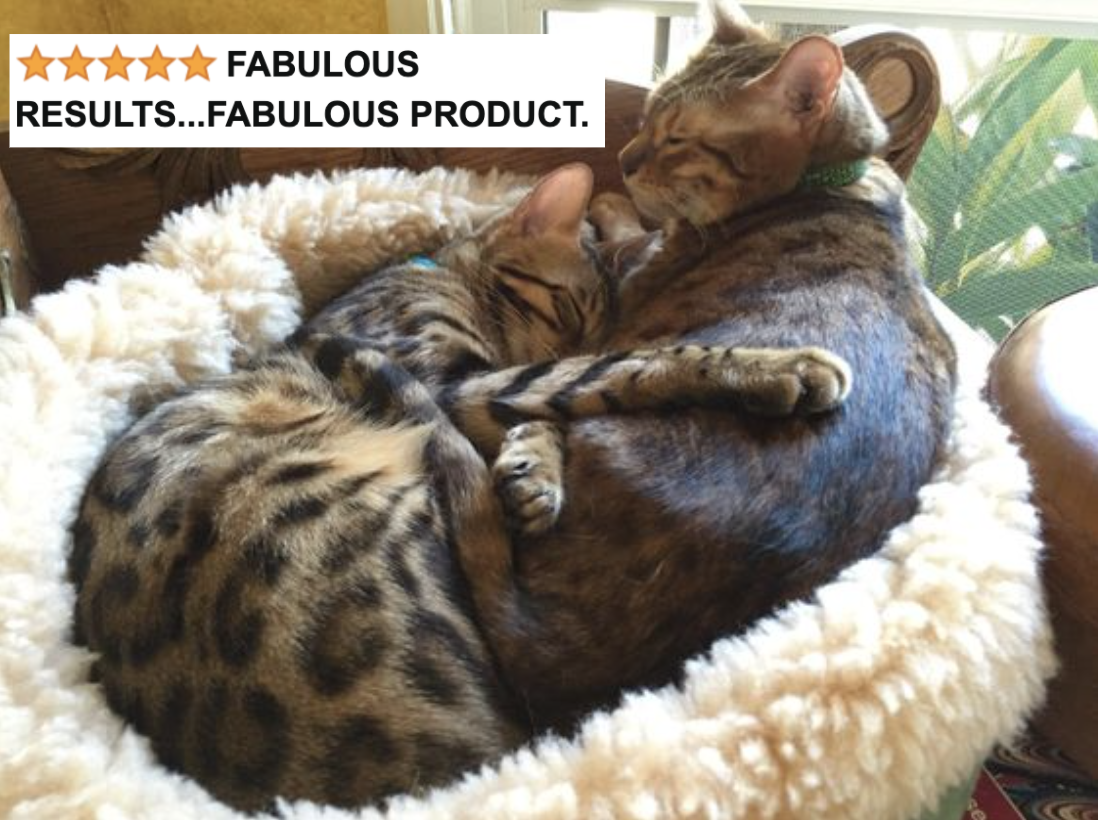 """Reviewer's two cats snuggling together in bed with five-star caption """"fabulous results...fabulous product"""""""