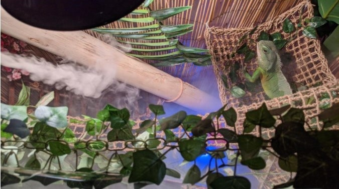 A humidifier fog machine that maintains a moist environment for reptiles