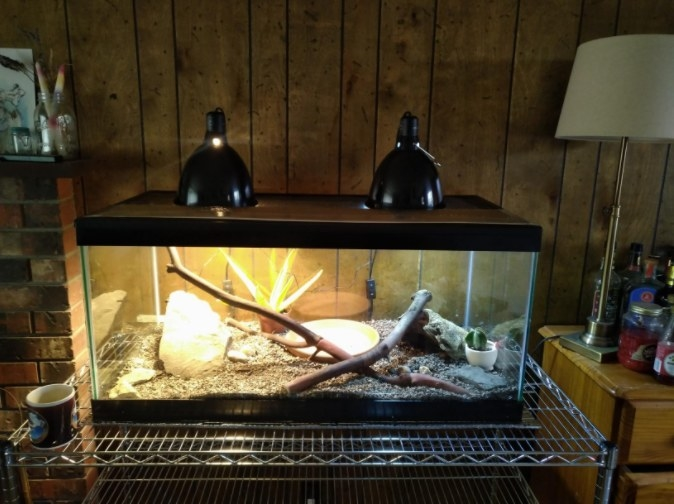 A black mesh screen cover with a sturdy steel frame that protects reptiles from clawing pets and can withstand high temperatures from lighting fixtures