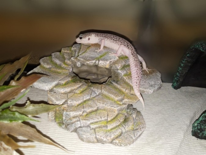 A step ledge for terrariums to provide hiding spots for reptiles