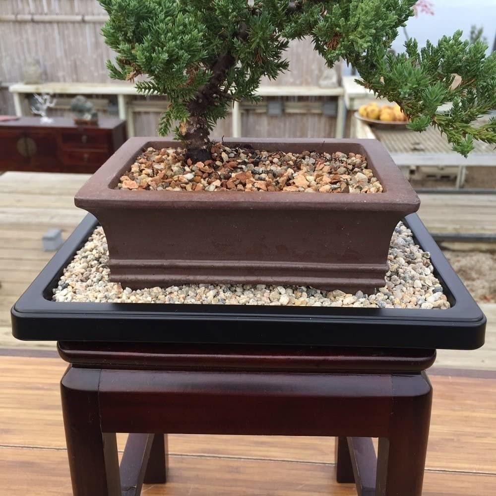 pebble tray under bonsai