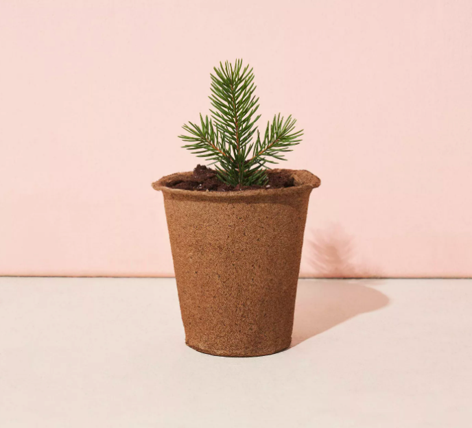 The Blue Spruce One for One Tree Kit