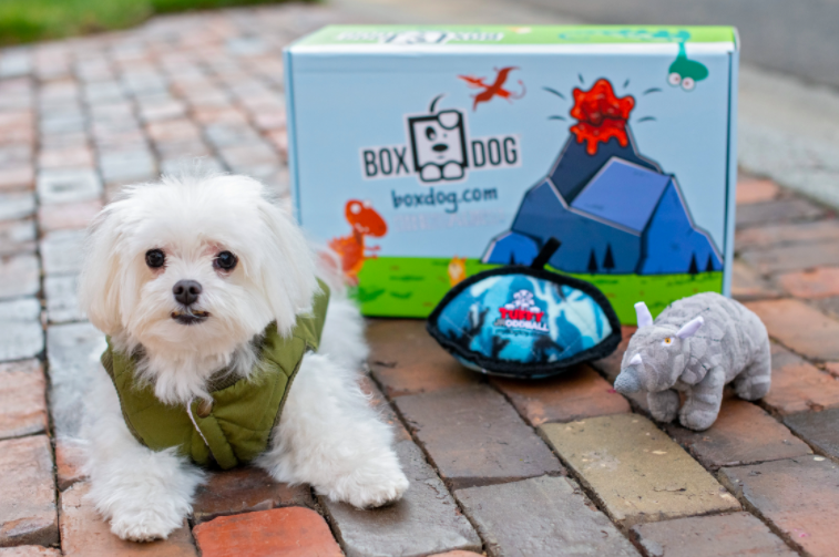 a small white dog wearing a green vest next to the subscription box with two toys