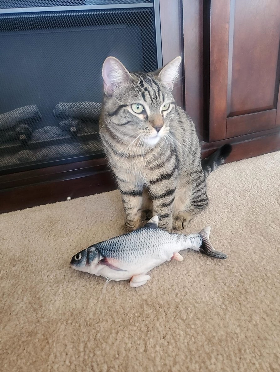 The reviewer's cat with the flopping fish toy