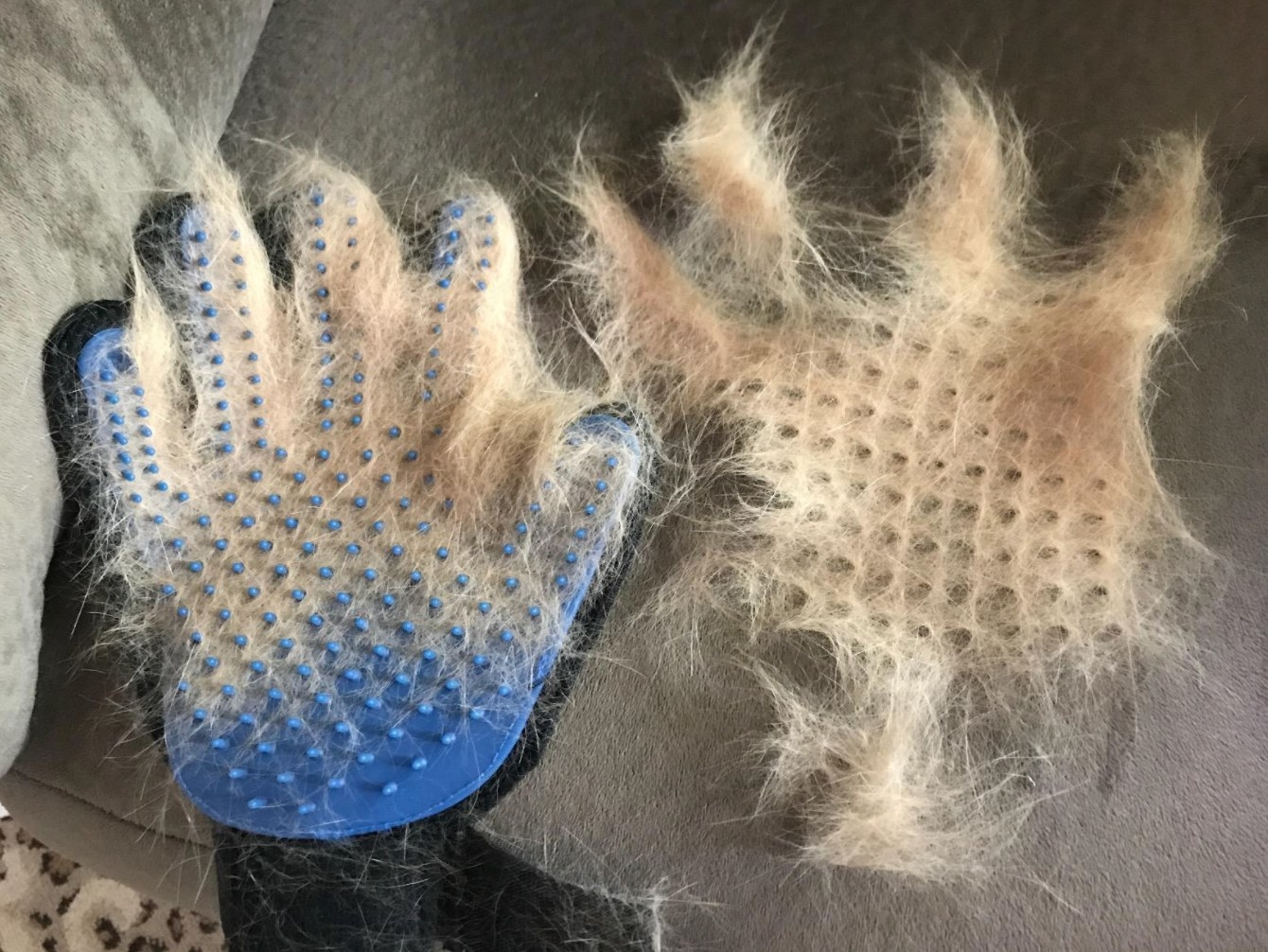 A reviewer's photo of the set of cat deshedding gloves in blue