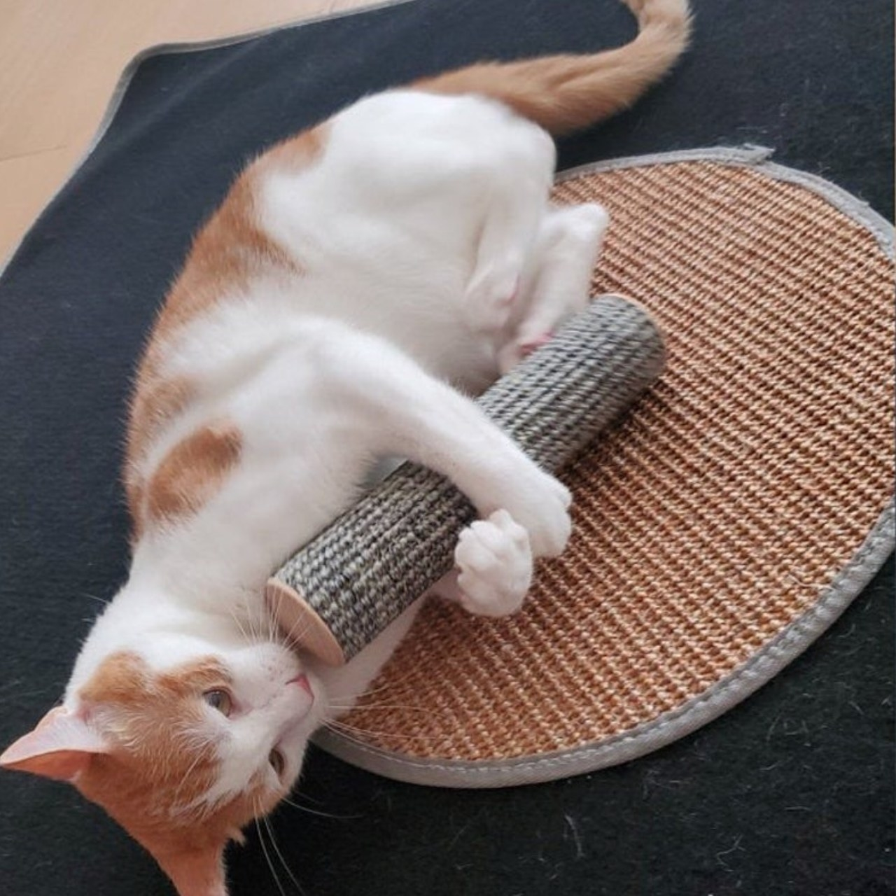 The cat roller toy being held by an orange and white cat