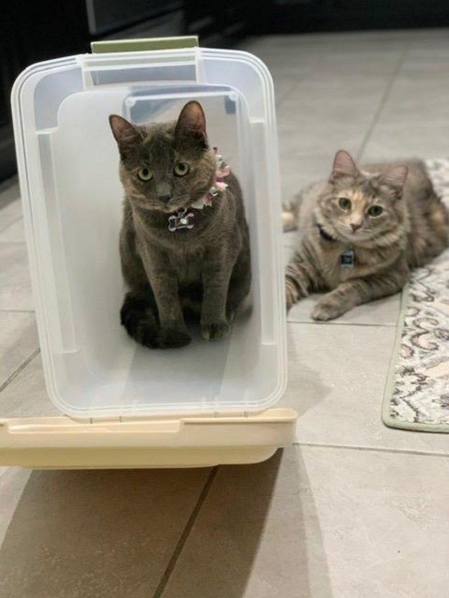 Reviewer's cat playfully sitting in the storage container