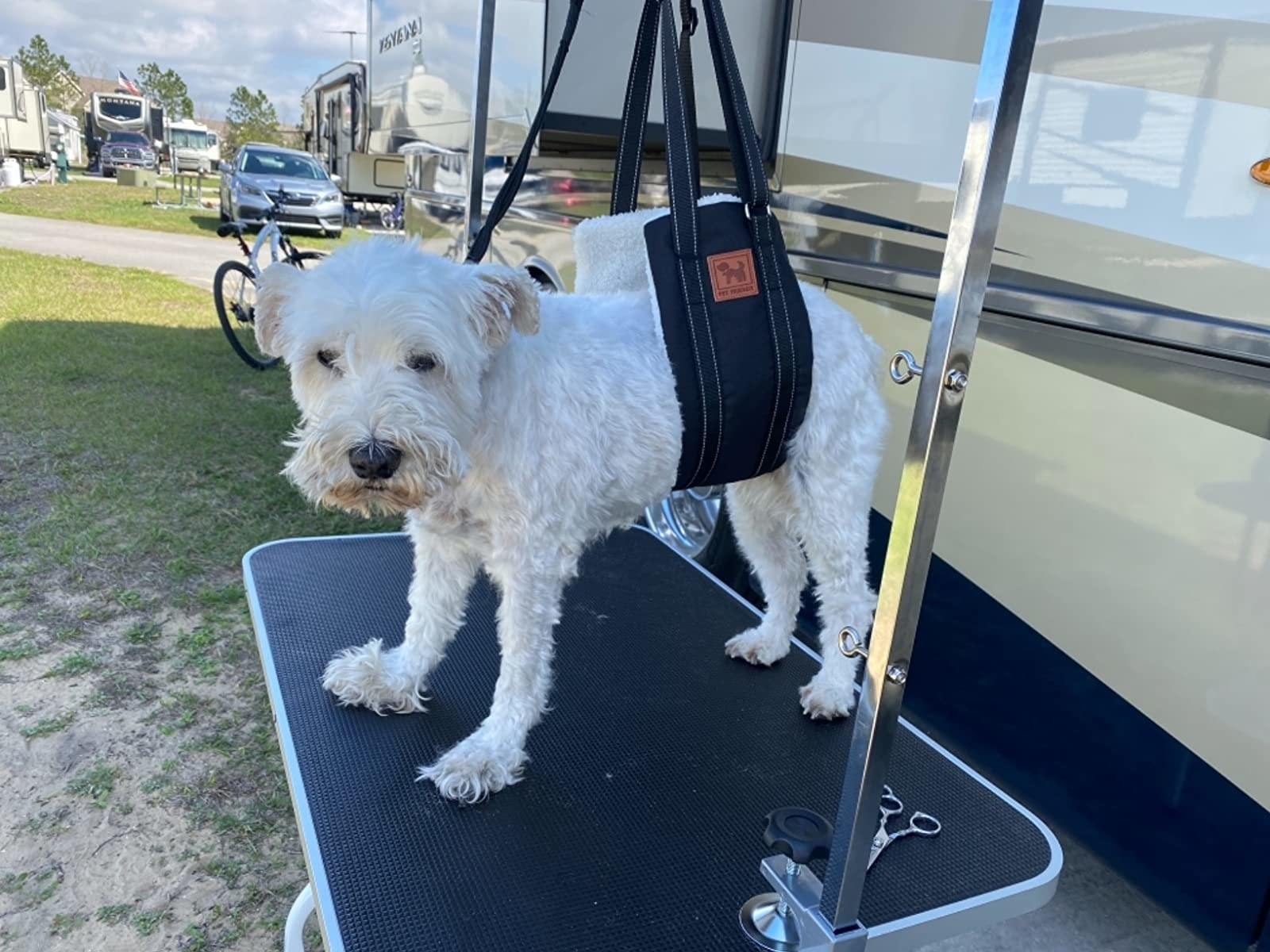 Review photo of dog using the lifting mobility harness