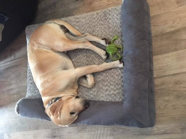 Review photo of dog enjoying the orthopedic pet bed