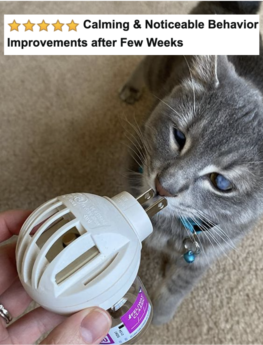 """Reviewer's cat calmly sniffing the diffuser with five-star caption """"calming and noticeable behavior improvements after few weeks"""""""