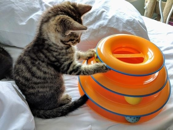 Reviewer's kitten playing with the toy