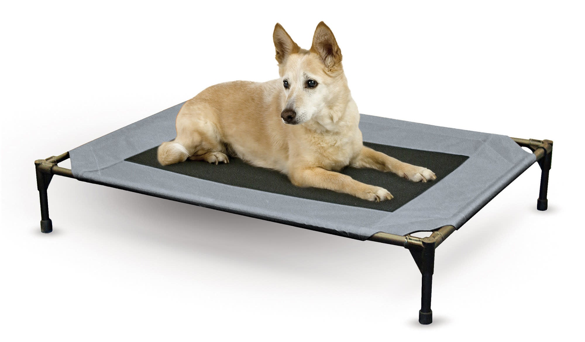 a medium-sized dog on top of the blue and black cot