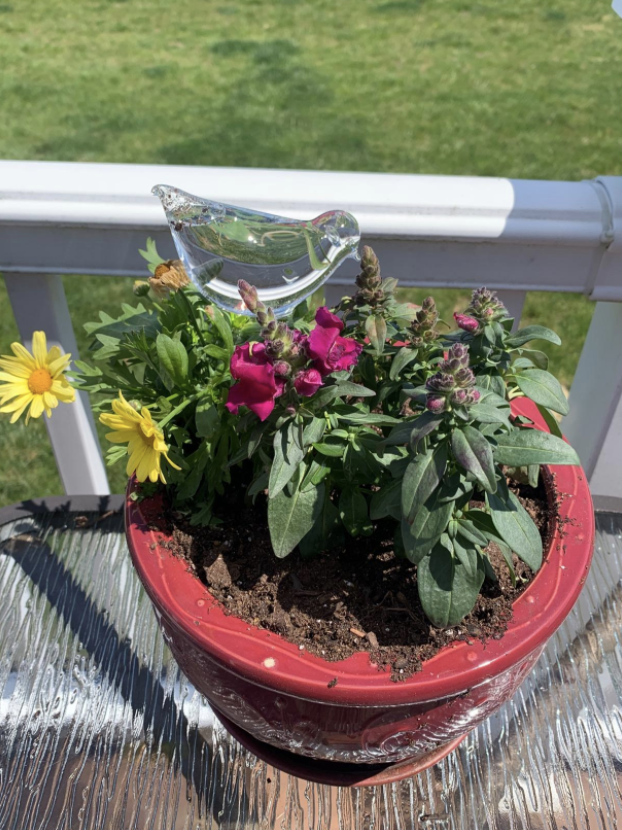 container plant outside with the bird shaped globe stuck into the soil