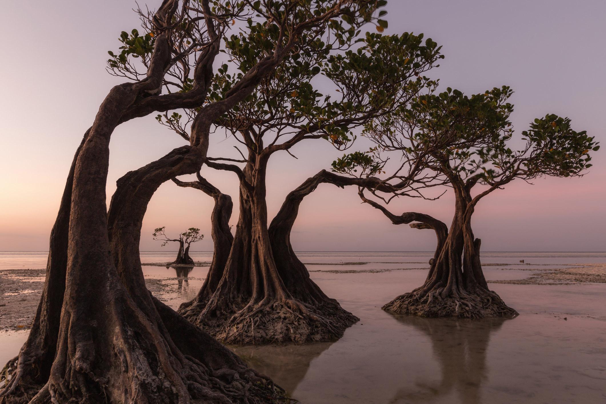 Sumba island in Indonesia.