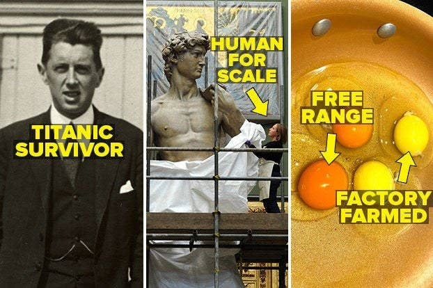 A titanic survivor, the size of the statue of david next to a person, and free range versus factory farmed eggs