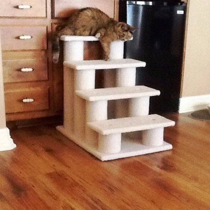 Cat enjoying the scratching post and stairs ramp