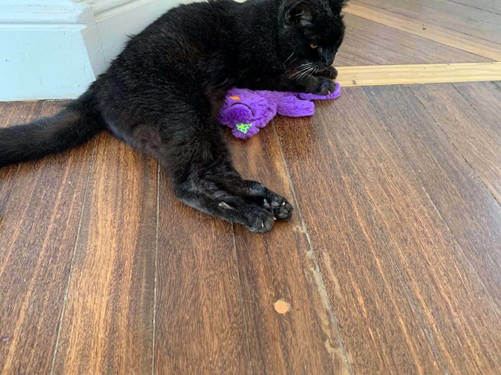 Review photo of cat enjoying the plush toy