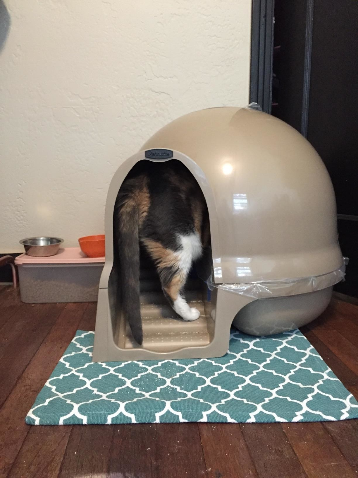 Review photo of cat using the pearl white dome litter box