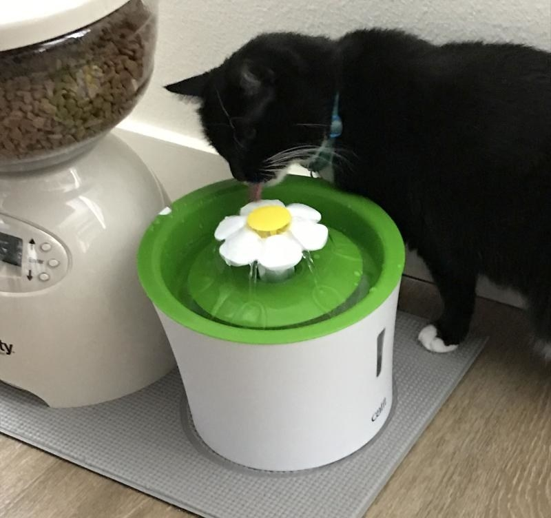 A cat drinks from the fountain
