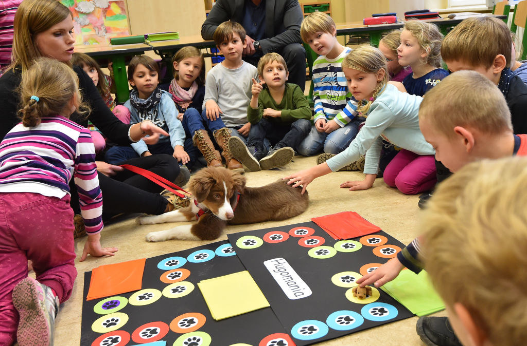 A classroom of german kids meet a dog