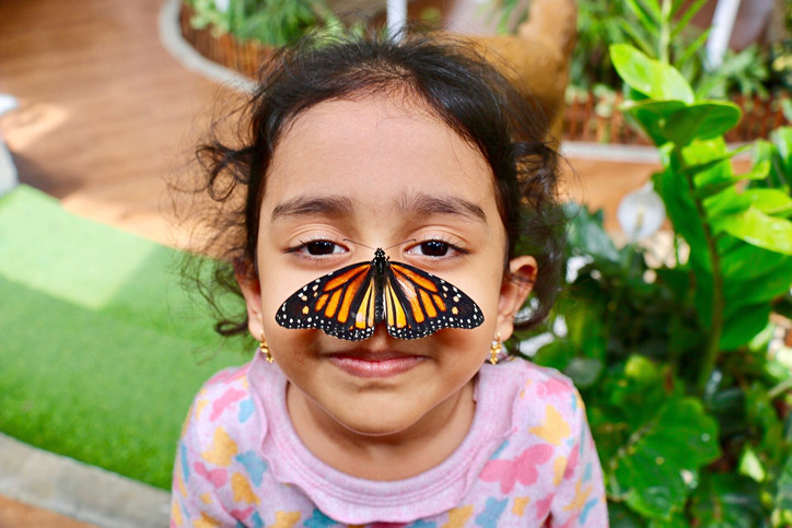 A little girl has a butterfly sitting on her nose