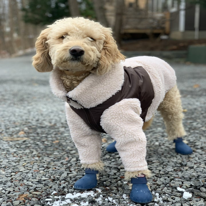 Dog wearing the natural with brown doggie fleece jacket