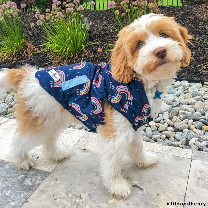 Dog wearing the reversible raincow