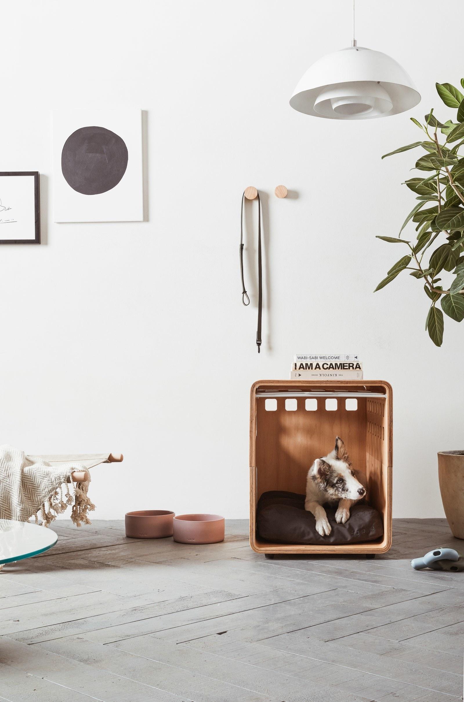 Dog enjoying the crate