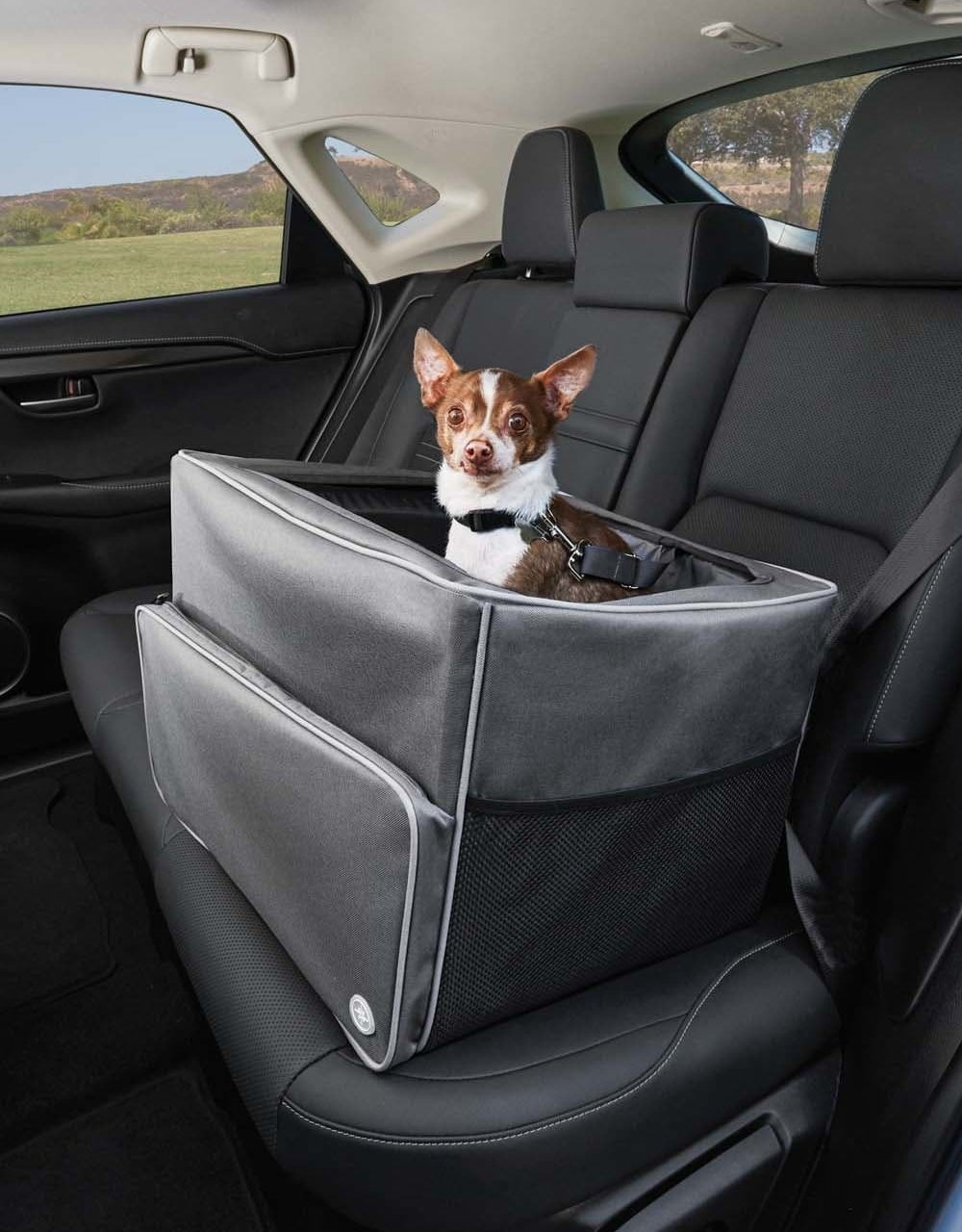 A small dog uses the gray booster seat in the back seat of an SUV