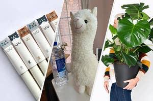 L: cat pens M: stuffed white llama R: model holding large monstera plant