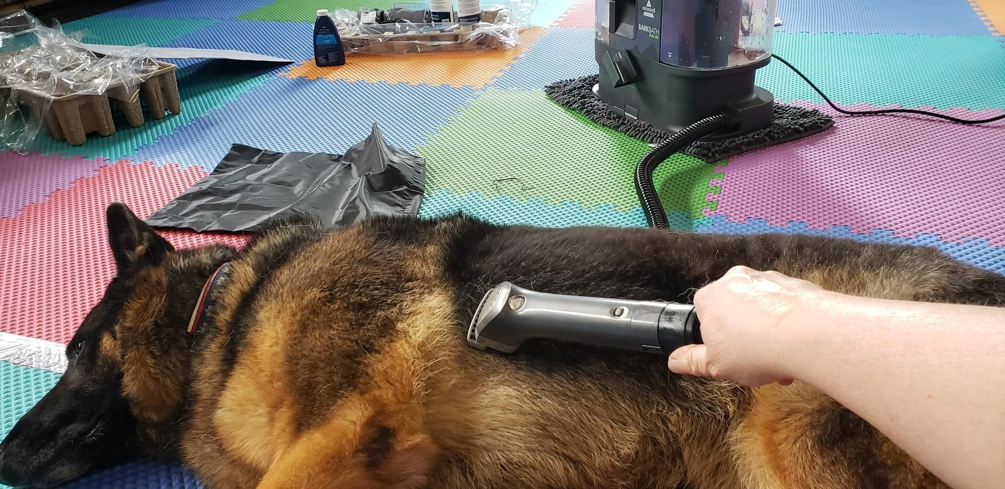 A reviewer uses the machine to clean their dog