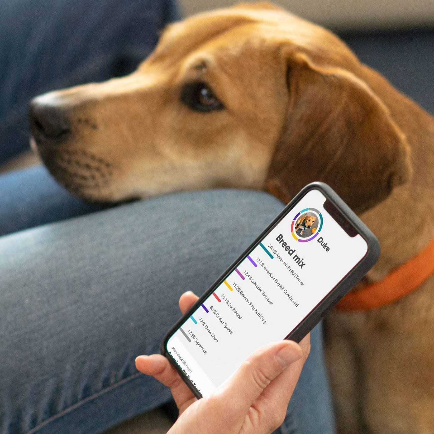 A person looks at the results from the test on their phone while the dog waits in their lap