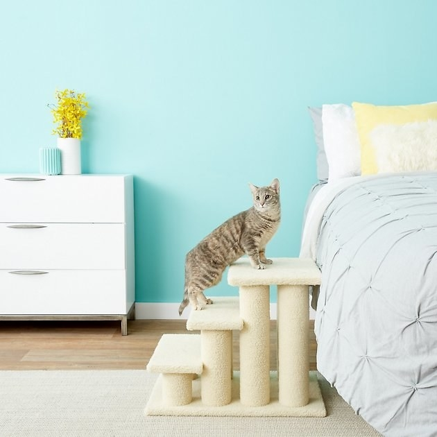 A cat uses the steps