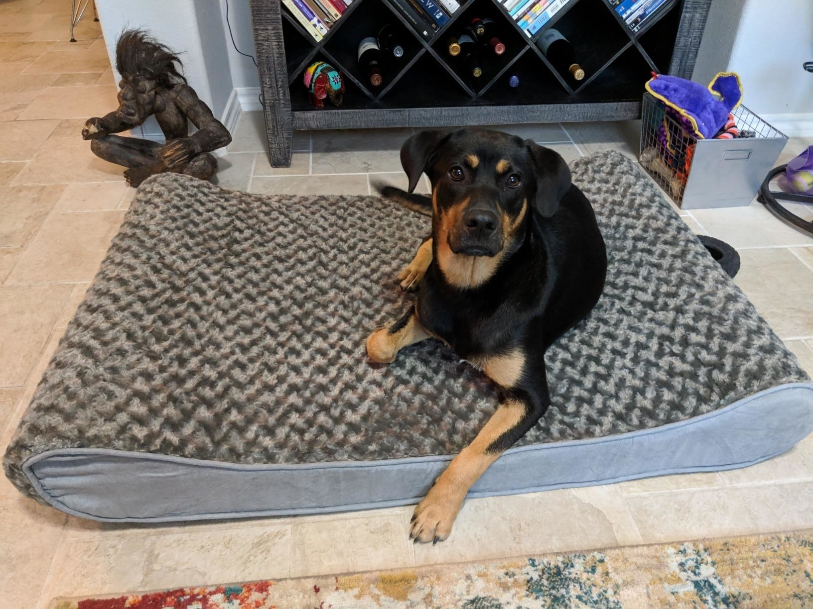 reviewer showing their dog on the large dog bed