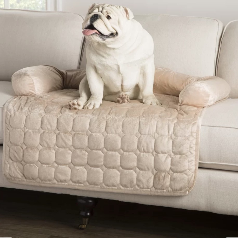 Dog sitting on furniture protector on couch