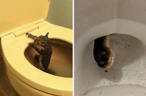 A squirrel coming out of a toilet and a snake popping it head out of a toilet