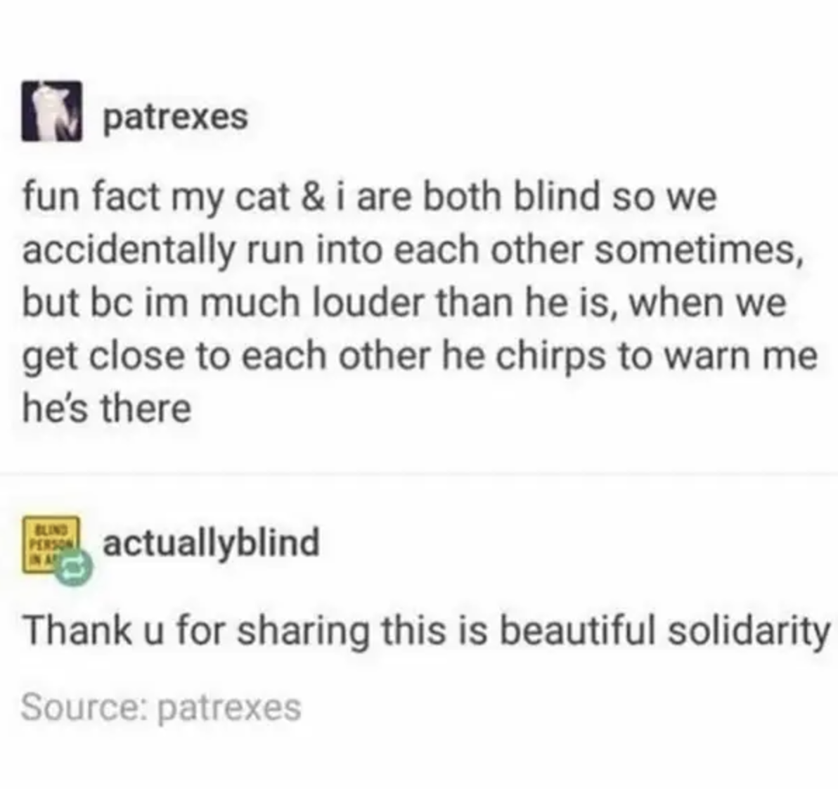 tumblr story about a blind person and a blind cat having each other's backs