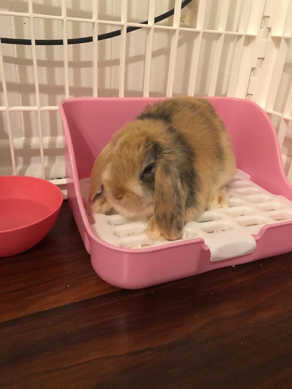 A rabbit uses their litter box