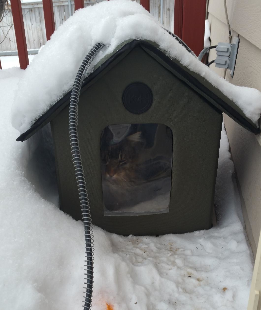 A cat in the house in the snow