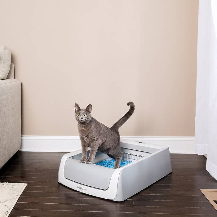 a cat using a self-cleaning litter box