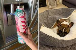 water bottle and dog bed