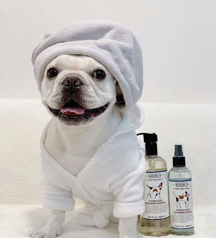 A French bull dog next to the spray and shampoo