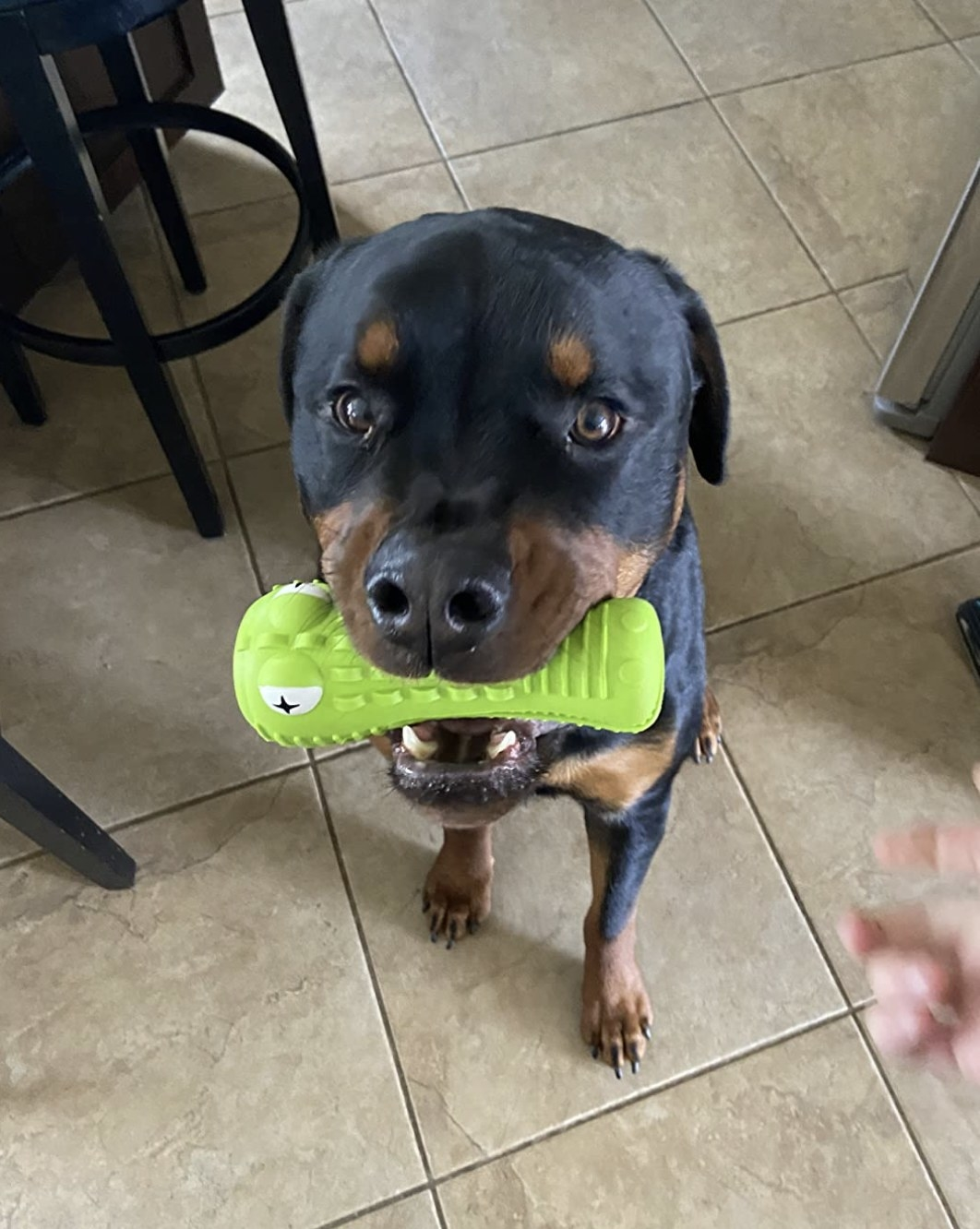 a dog with a green chew toy in its mouth