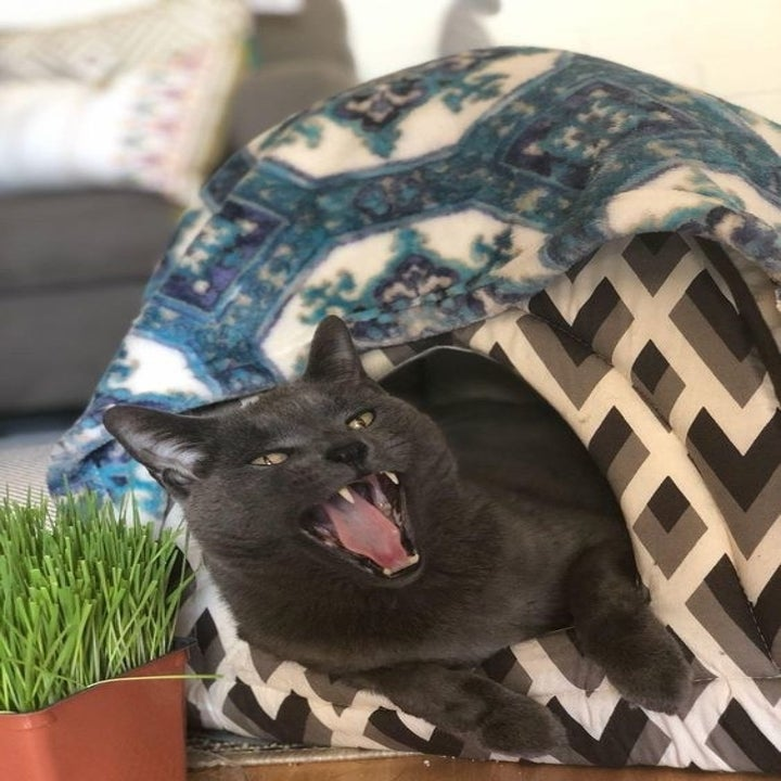 Reviewer's cat angrily hissing